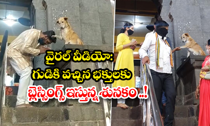 TeluguStop.com - Viral Video The Dog Giving Blessings To The Devotees Who Come To The Temple