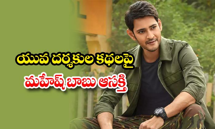 TeluguStop.com - Super Star Mahesh Babu Focus On Young Directors