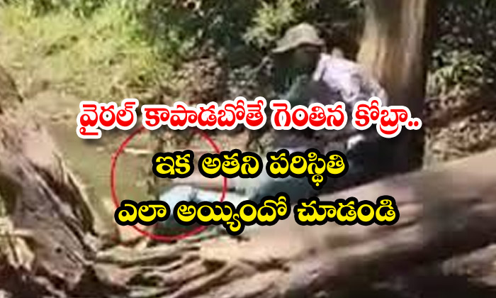 TeluguStop.com - Cobra Who Jumped To Save Now Look At His
