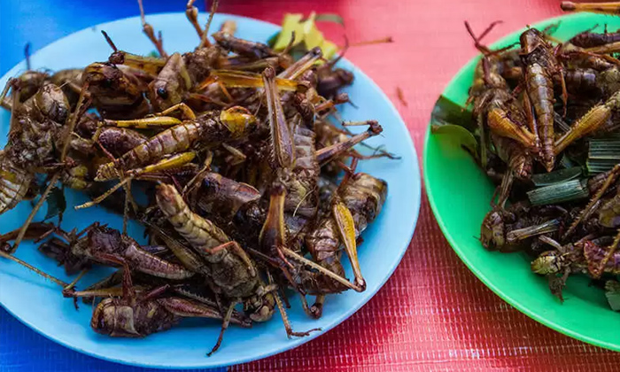 Telugu Bugs, Eat Mealworms, European Officially, Food Court, Insects As Meal-Latest News - Telugu