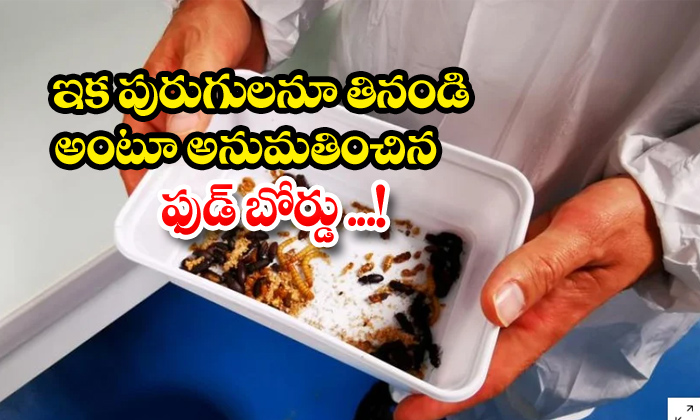 TeluguStop.com - European Officially Allows To Eat Mealworms Insects As Meal