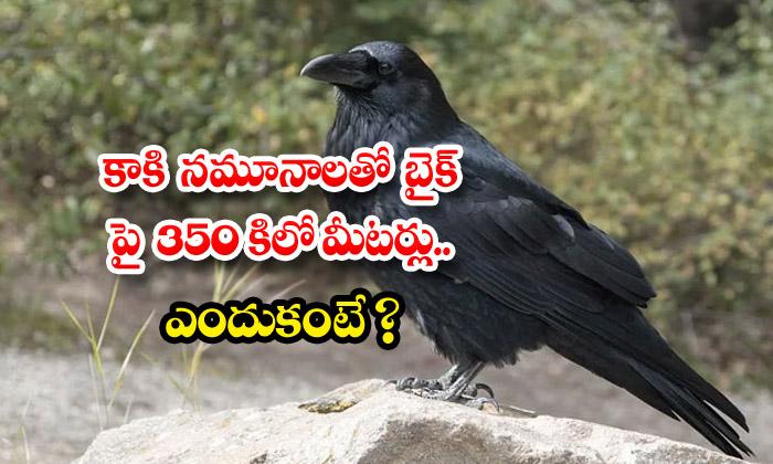 TeluguStop.com - Madhya Pradesh Vet Goes 350 Km On Bike With Crow Samples