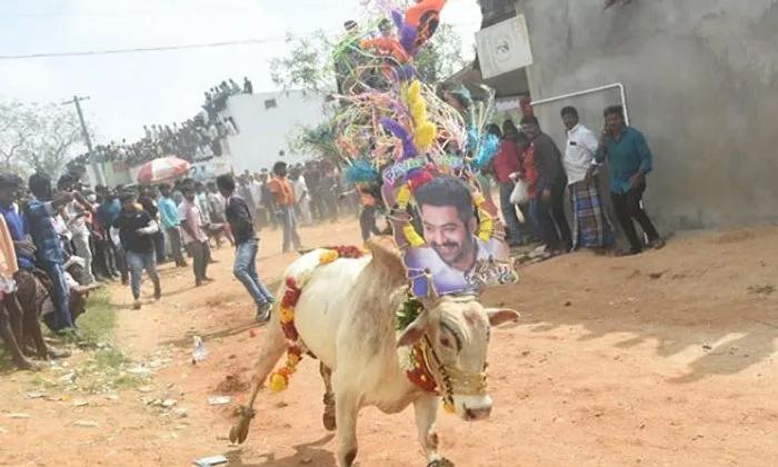 TeluguStop.com - జల్లికట్టులో జూనియర్ ఎన్టీఆర్.. ఫోటో వైరల్..-Latest News - Telugu-Telugu Tollywood Photo Image