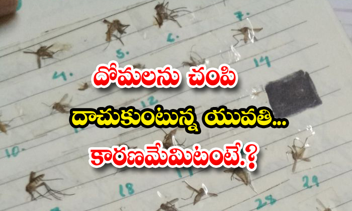 TeluguStop.com - Viral Girl Collects Numbers Every Mosquito She Has Killed